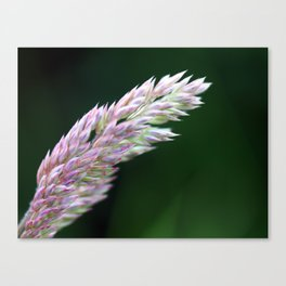 Simple(ly) Beautiful (Green and Purple Plant Flower Leaf) Canvas Print
