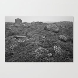 Seawall Canvas Print