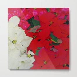Poinsettias, Olbrich 5334 Metal Print
