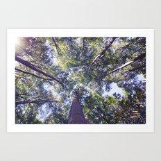 woodland 3437 Art Print