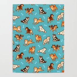 shibas in blue Poster