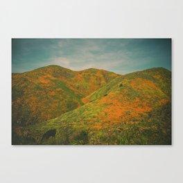 California Poppies 020 Canvas Print