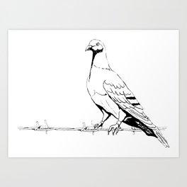 Friedenstaube,Dove of Peace Art Print