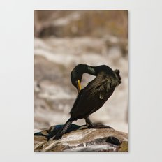 European Shag Canvas Print