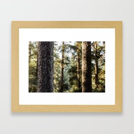 Sitka Forest Framed Art Print