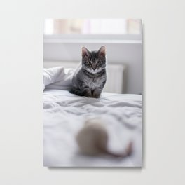 Before the pounce Metal Print