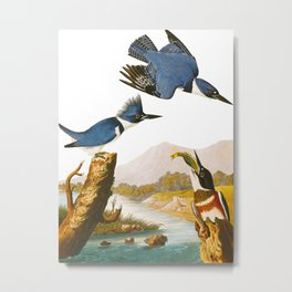 Belted Kingfisher John James Audubon Vintage Scientific Illustration American Birds Metal Print