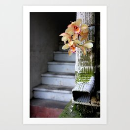 Delight From Up Above Art Print