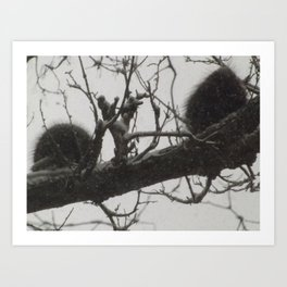 Porcupines Caught in the Snow Art Print