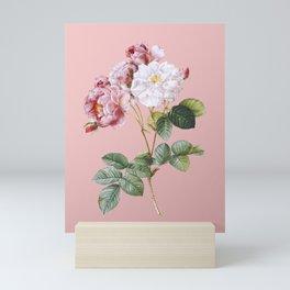 Vintage Pink Damask Rose Botanical Illustration on Pink Mini Art Print