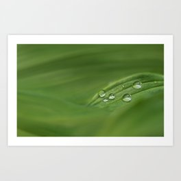 Water drops on green grass Art Print
