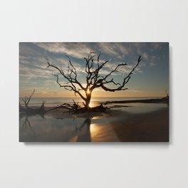 Tree and Driftwood Metal Print