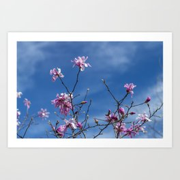 Cherry Spring Flowers under the Blue Sky of Italy Art Print