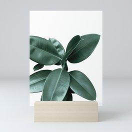Rubber fig Plant Mini Art Print