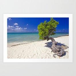 Divi Tree on a Caribbean Beach,  Aruba, Dutch Antilles Art Print