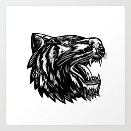Tiger Growling Scratchboard Art Print