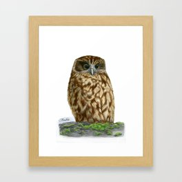 New Zealand Morepork Framed Art Print