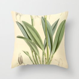 Masdevallia tovarensis Curtis' 91 (Ser. 3 no. 21) pl. 5505 (1865) Throw Pillow