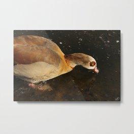A yellow duck Metal Print
