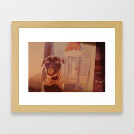 beach dog Framed Art Print