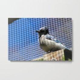 Blue Jay on a Post Metal Print
