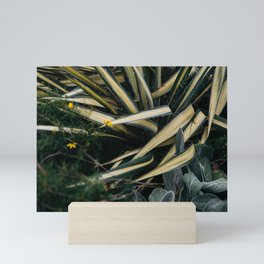 Agave in the gardens Mini Art Print