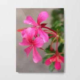 Pretty Pink Flowers In A Hanging Basket Metal Print