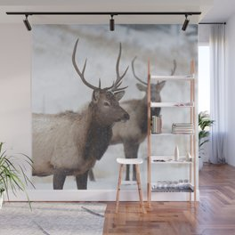Watercolor Elk Juvenile 19, Estes Park, Colorado, Winter Paws Wall Mural