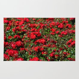 Red roses bunches grow in park Rug