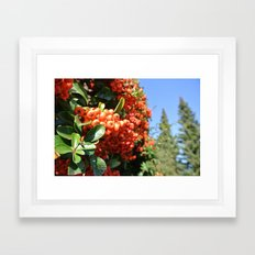 Brightening II Framed Art Print