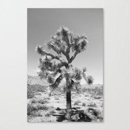 Joshua Tree Monochrome, No. 3 Canvas Print