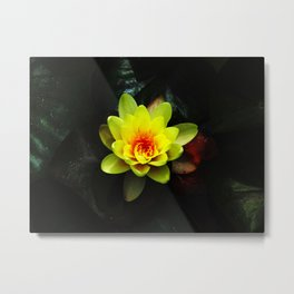 Yellow Water Lilly In The Pond Metal Print