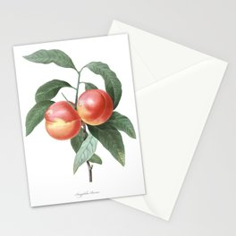 HIGHEST QUALITY botanical poster of Peach Stationery Cards