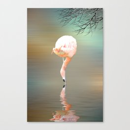 Feathered in pink Canvas Print
