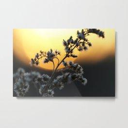 macro sunset Metal Print