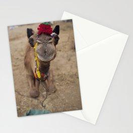 Smiling Camel Stationery Cards