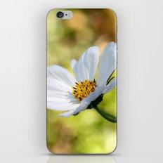yellow & white flower iPhone & iPod Skin