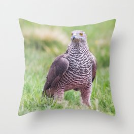Northern Goshawk Throw Pillow