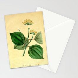 Flower Strychnos Nux vomica10 Stationery Cards