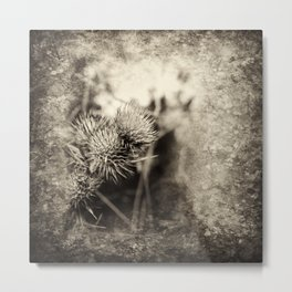 Beautiful thistle growing wild and sepia texture Metal Print
