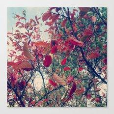 Colours of nature Canvas Print