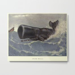 Vintage Sperm Whale Painting (1909) Metal Print