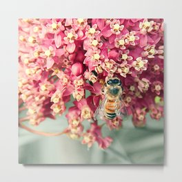Bee on Milkweed Metal Print