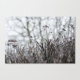 frozen. Canvas Print