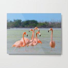 Flamingo stroll Metal Print