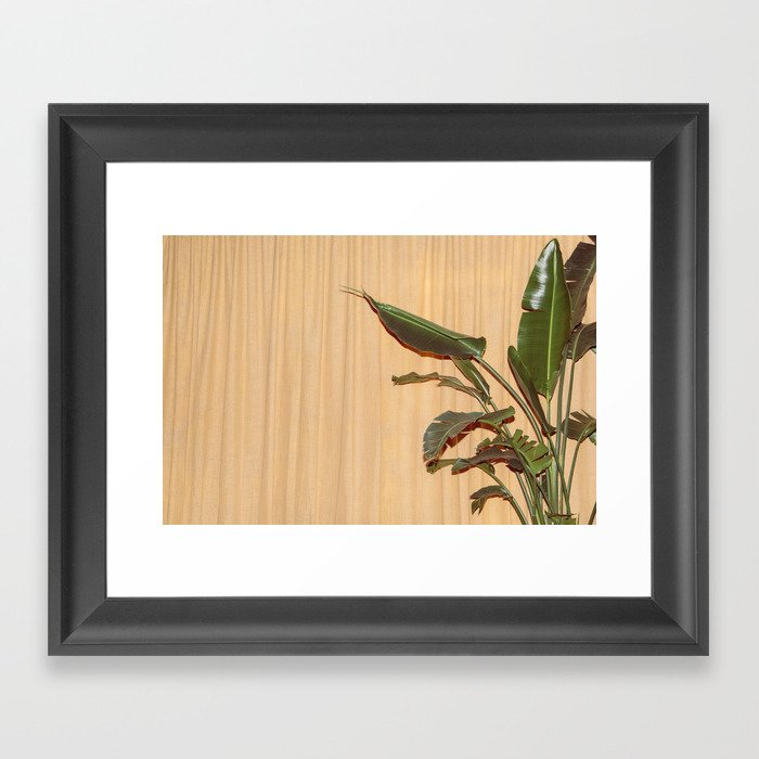 Curtain and Plant Framed Art Print