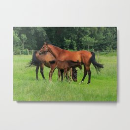 Horse Family In The Field In Holland Metal Print
