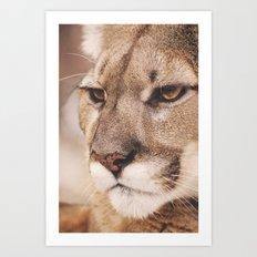 Cougar I Art Print