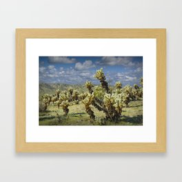 Cactus called teddy bear cholla No.0265 Framed Art Print