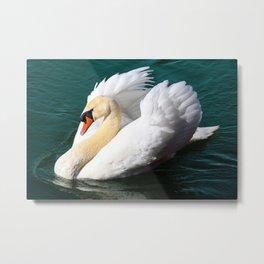 Swan Floating on the Water Metal Print